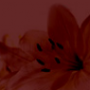Euphorie Massagen Berlin Logo
